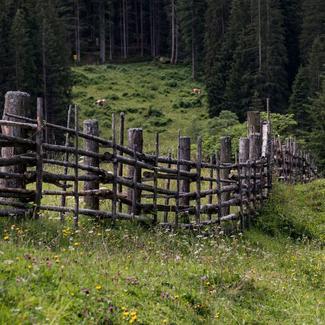 Holzzaun auf der Alm